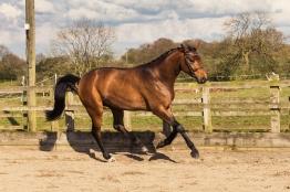 Horse_photographer_Derbyshire-24
