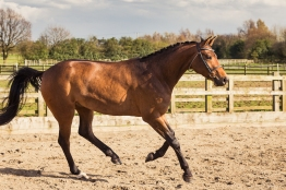 Horse_photographer_Derbyshire-25