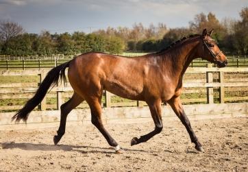 Horse_photographer_Derbyshire-26
