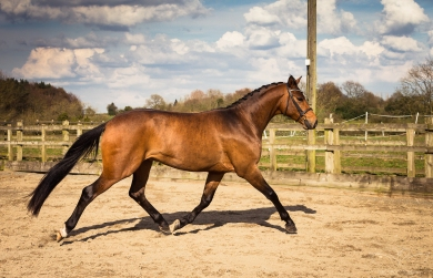 Horse_photographer_Derbyshire-27