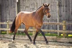 Horse_photographer_Derbyshire-28