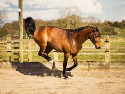 Horse_photographer_Derbyshire-31