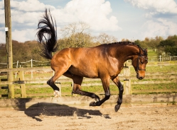 Horse_photographer_Derbyshire-32