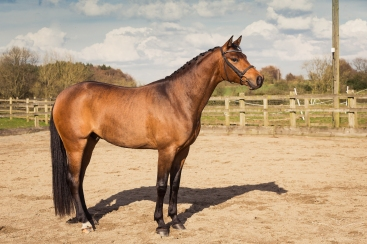 Horse_photographer_Derbyshire-35