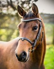Horse_photographer_Derbyshire-4
