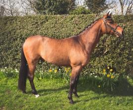Horse_photographer_Derbyshire-5