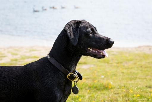 Dog_Photographer_Derbyshire-12