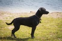 Dog_Photographer_Derbyshire-17