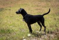 Dog_Photographer_Derbyshire-20
