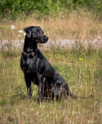 Dog_Photographer_Derbyshire-21
