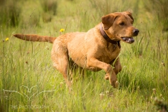 Dog_photographer_Derbyshire-26