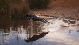 Dog_Photographer_Derbyshire-26