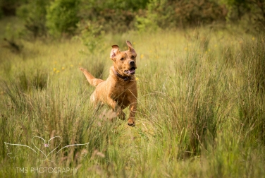 Dog_photographer_Derbyshire-28
