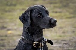 Dog_Photographer_Derbyshire-28