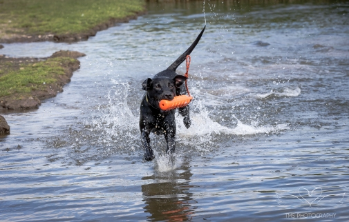 Dog_Photographer_Derbyshire-36