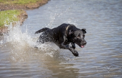 Dog_Photographer_Derbyshire-39