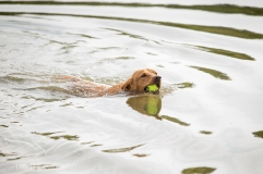 Dog_photographer_Derbyshire-43