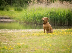 Dog_photographer_Derbyshire-44