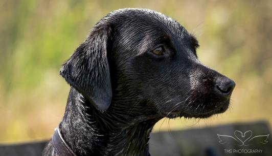 Dog_Photographer_Derbyshire-46