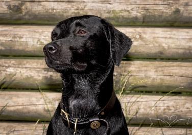 Dog_Photographer_Derbyshire-50