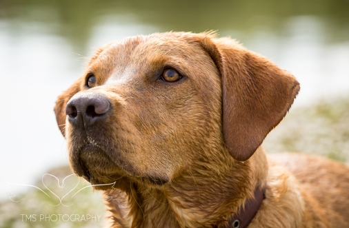 Dog_photographer_Derbyshire-52