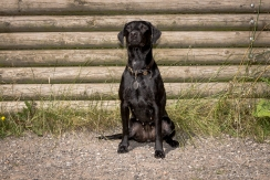 Dog_Photographer_Derbyshire-52