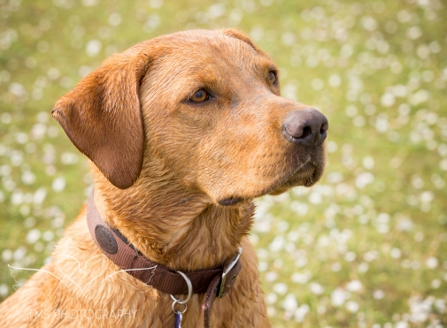 Dog_photographer_Derbyshire-55