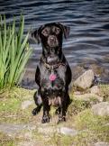 Dog_Photographer_Derbyshire-55