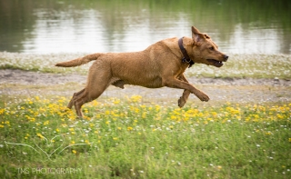 Dog_photographer_Derbyshire-59