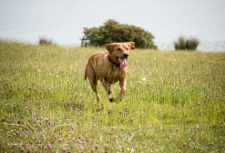 Dog_photographer_Derbyshire-61
