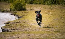 Dog_Photographer_Derbyshire