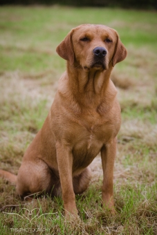 Dog_equine_Photographer_Derbyshire (12 of 74)
