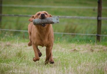 Dog_equine_Photographer_Derbyshire (16 of 74)