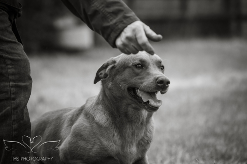 Dog_equine_Photographer_Derbyshire (17 of 74)