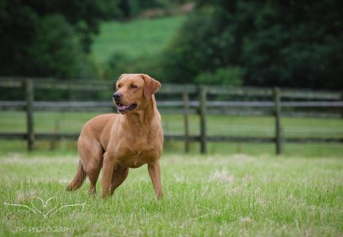 Dog_equine_Photographer_Derbyshire (18 of 74)