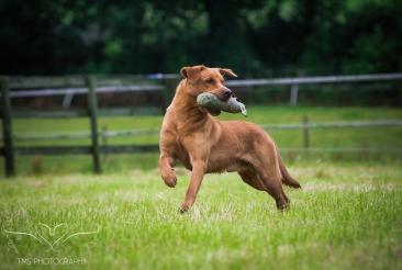 Dog_equine_Photographer_Derbyshire (21 of 74)