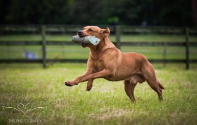 Dog_equine_Photographer_Derbyshire (22 of 74)