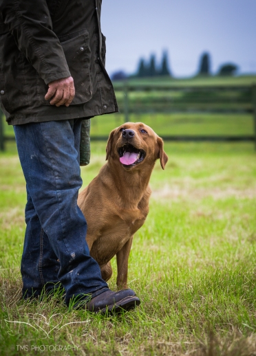 Dog_equine_Photographer_Derbyshire (24 of 74)