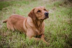 Dog_equine_Photographer_Derbyshire (4 of 74)
