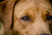 Dog_equine_Photographer_Derbyshire (41 of 74)