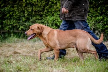Dog_equine_Photographer_Derbyshire (42 of 74)