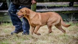Dog_equine_Photographer_Derbyshire (43 of 74)