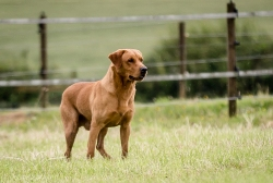 Dog_equine_Photographer_Derbyshire (46 of 74)