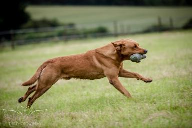 Dog_equine_Photographer_Derbyshire (47 of 74)