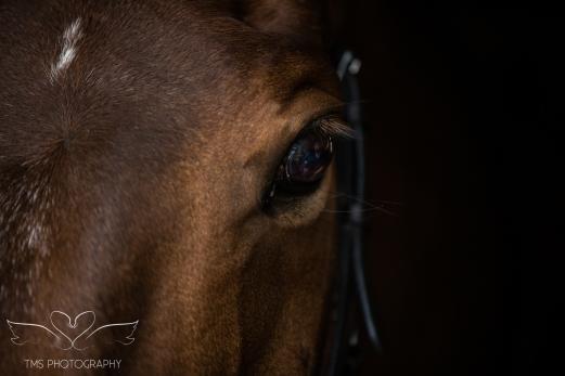 Dog_equine_Photographer_Derbyshire (48 of 74)