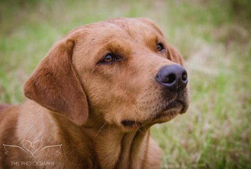 Dog_equine_Photographer_Derbyshire (5 of 74)