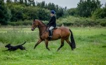 Dog_equine_Photographer_Derbyshire (56 of 74)