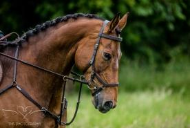 Dog_equine_Photographer_Derbyshire (59 of 74)