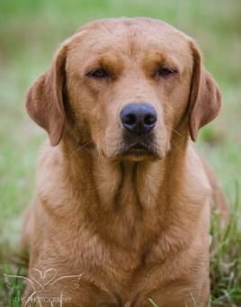 Dog_equine_Photographer_Derbyshire (6 of 74)
