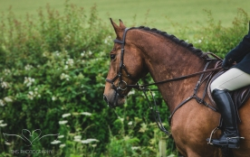 Dog_equine_Photographer_Derbyshire (63 of 74)